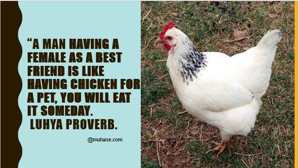 Chicken Pet Quote